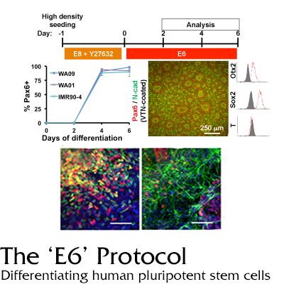 E6 protocol