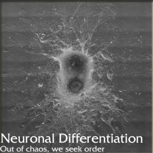 Neuronal Differentiation